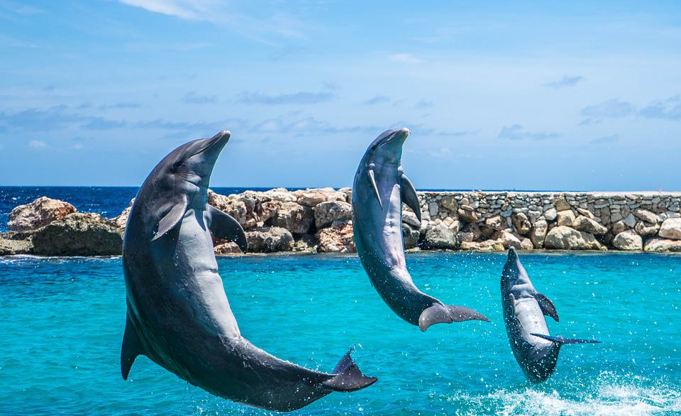 Free photo dolphins aquarium jumping fish free image for Dolphin fish pictures
