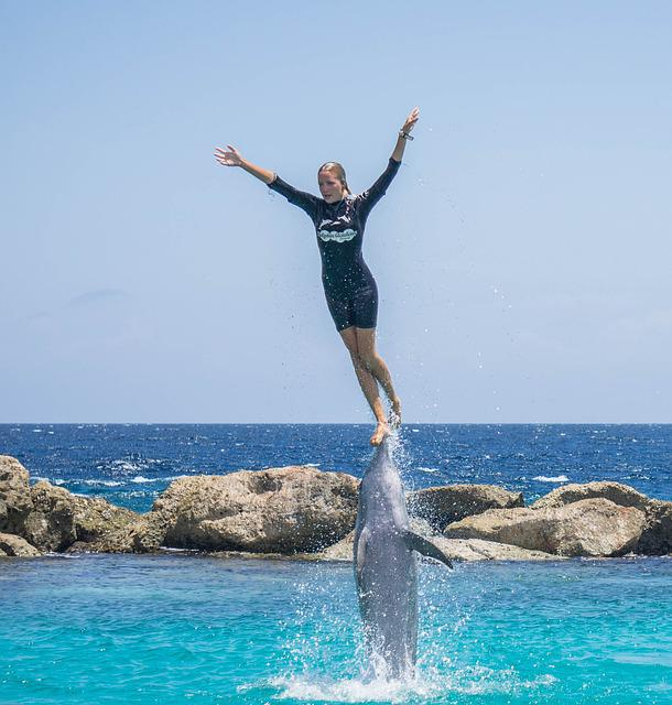 free photo dolphin stunt person jumping free image