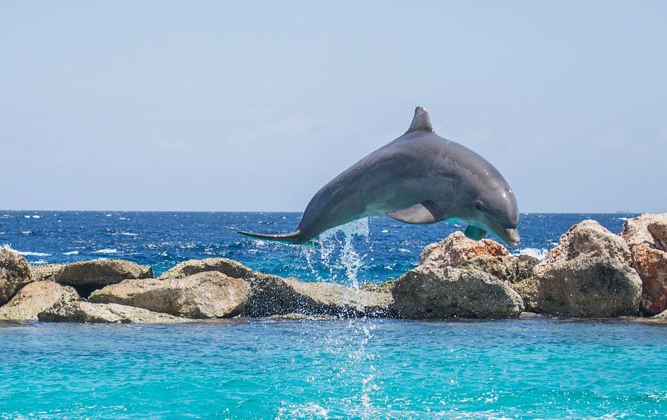 dolphin aquarium jumping  u00b7 free photo on pixabay