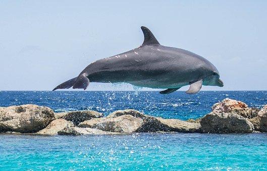 dolphin aquarium jumping fish animal ocean - Dolphin Pics