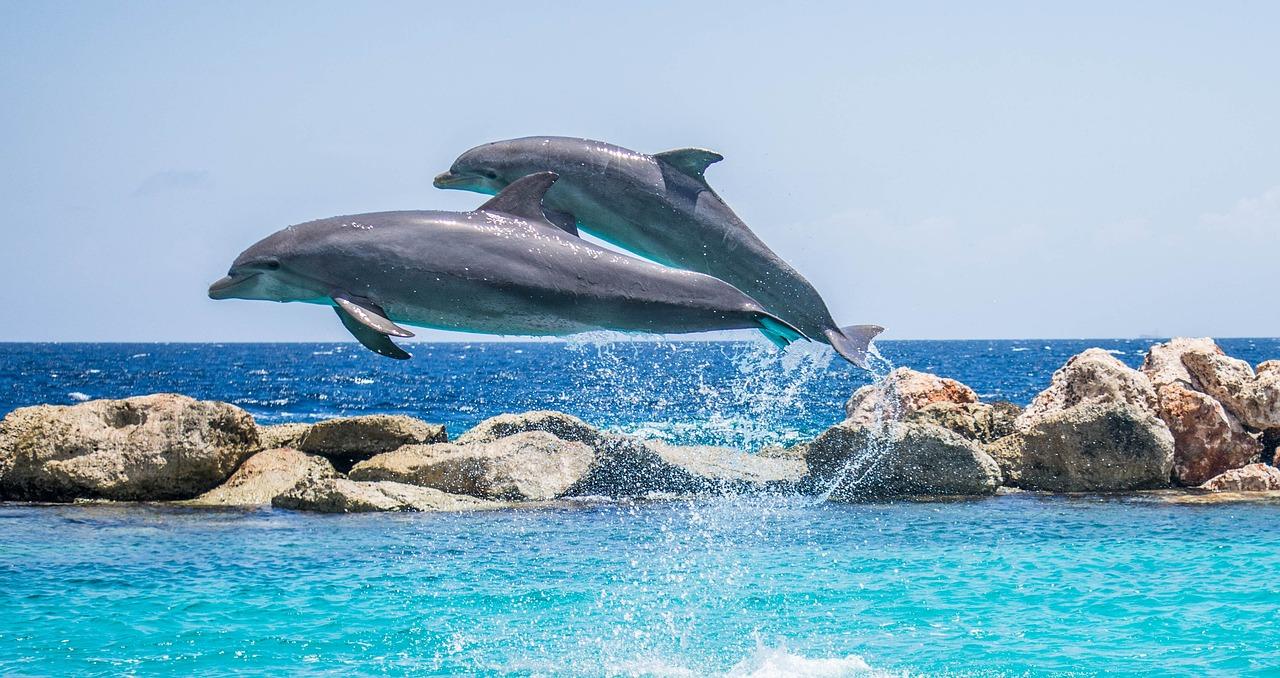 lei proíbe golfinhos e baleias em cativeiro