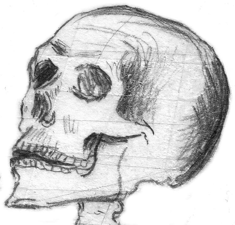 skull halloween skull bone skull and crossbones - Halloween Skull