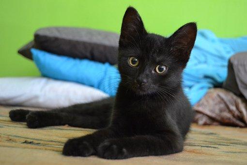 Black Cat Images Pixabay Download Free Pictures