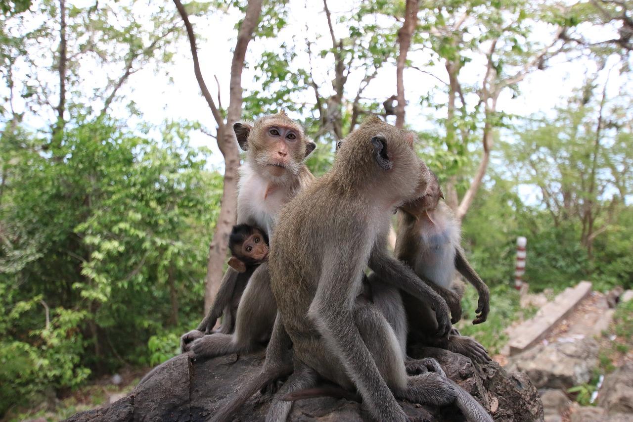 Прикольные картинки на рабочий стол обезьяны хватило