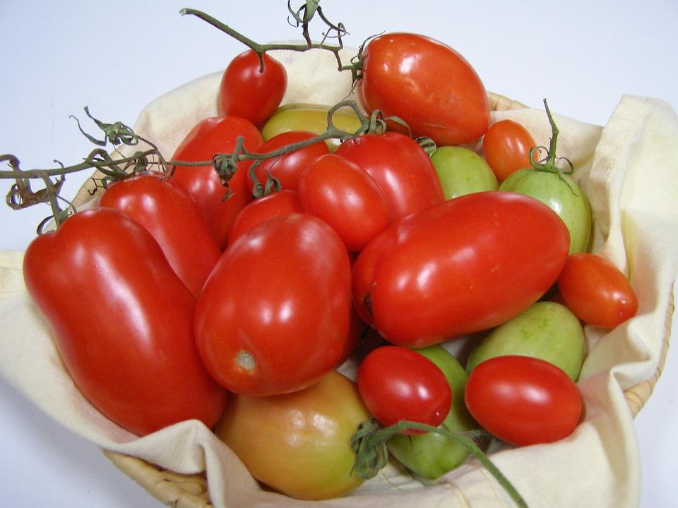 Tomatoes, Tomato Crop, Red, Roma Tomato, Plum Tomato