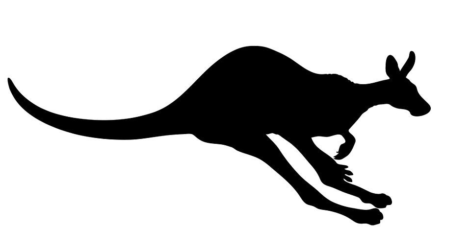 Free Illustration Kangaroo Animal Marsupial Free