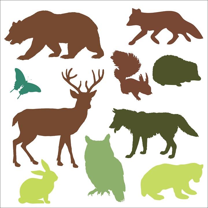 Lesne Zvierata Nesu Obrazok Zdarma Na Pixabay