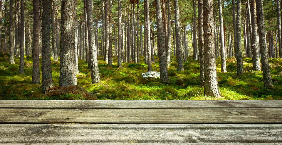 free photo background wood forest