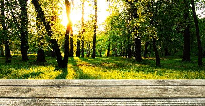 Background Wood Forest Presentation W