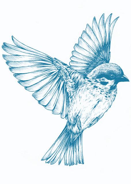 Illustration Gratuite Oiseau Bleu Dessin Printemps - Image Gratuite Sur Pixabay - 910376
