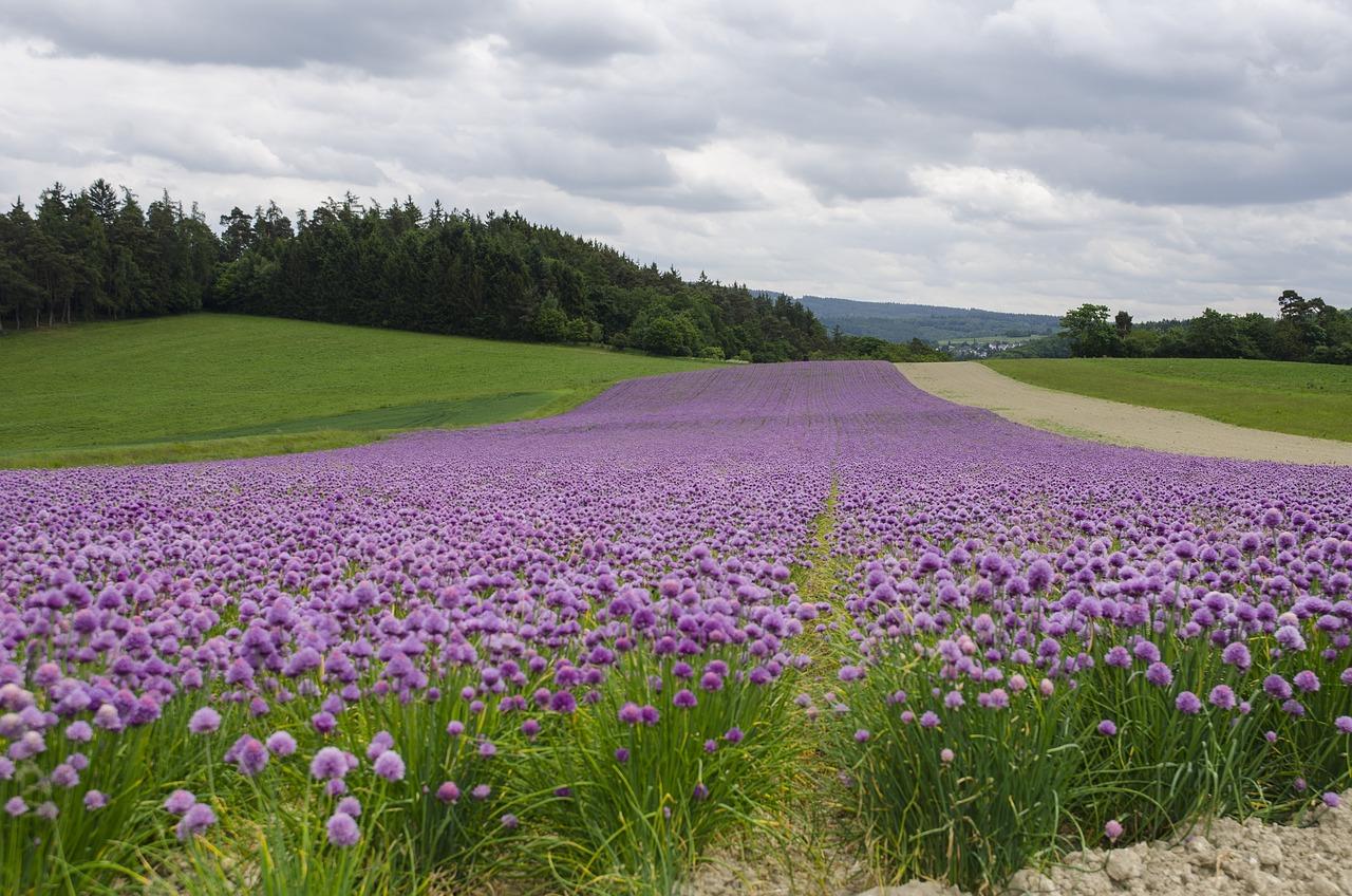 зал фото цветущих полей и лугов день десятилетия интронизации