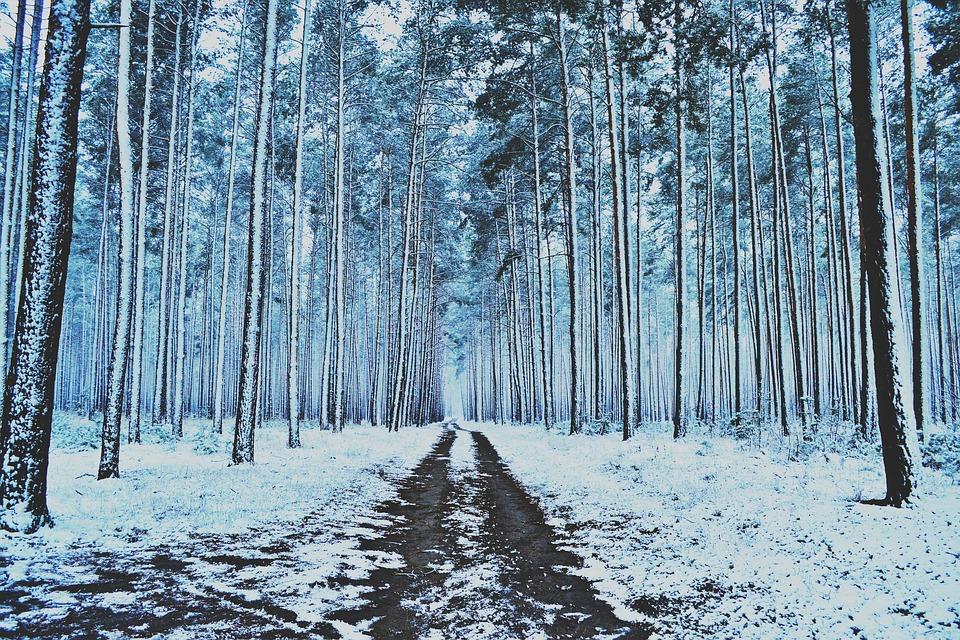 Invierno bosque nieve foto gratis en pixabay for Arboles en invierno