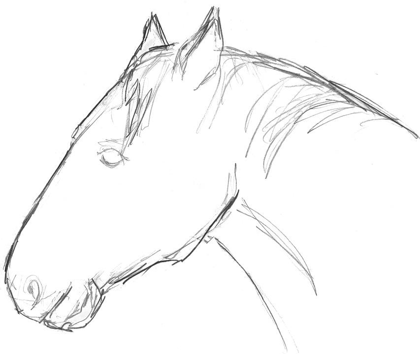 65 Gambar Sketsa Binatang Kuda Gratis Terbaru
