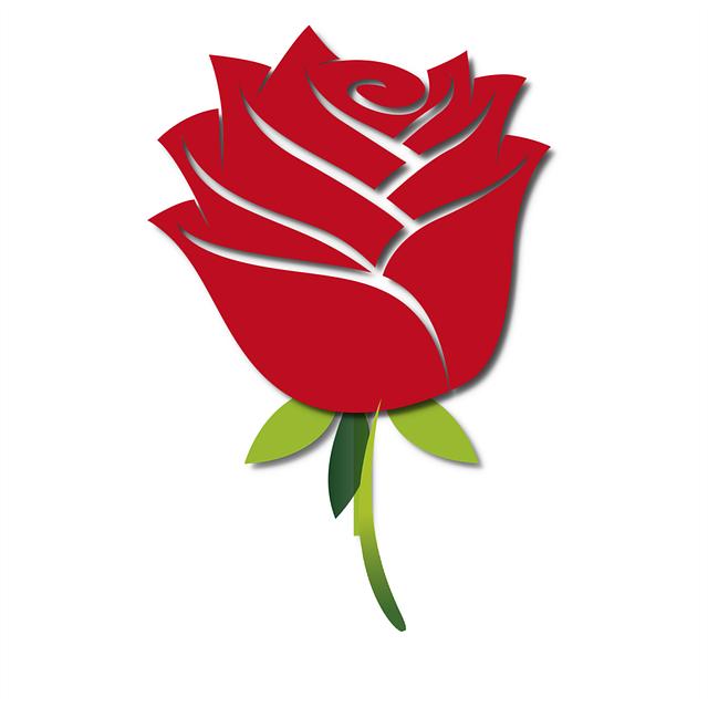Rose 640 Mawar Merah Wallpaper Hd