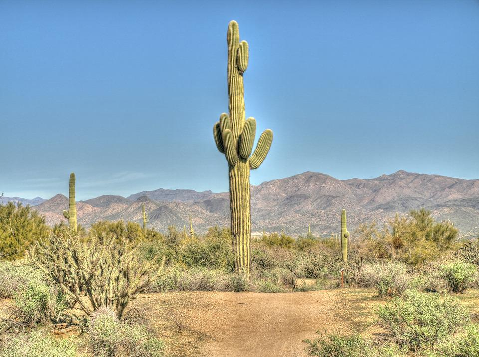 cactus saguaro desert 183 free photo on pixabay