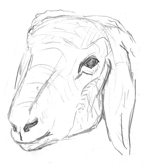 Sheep Lamb Animal Livestock Pet 913779 in addition Animal Lizard Reptile Silhouette 2027931 together with Stock Illustration  ic Book Black White Radial Lines Background Manga Anime Speed Graphic Ink Texture Superhero Action Frame Explosion Image64487237 likewise Hands Folded Hands Prayer Request 1389756 furthermore Allah God Islam Arabic Islamic 42248. on hd motion backgrounds