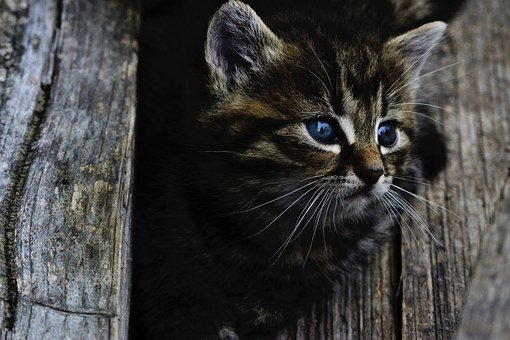 Cat, Kitten, Cute, Little, Wood, Feline