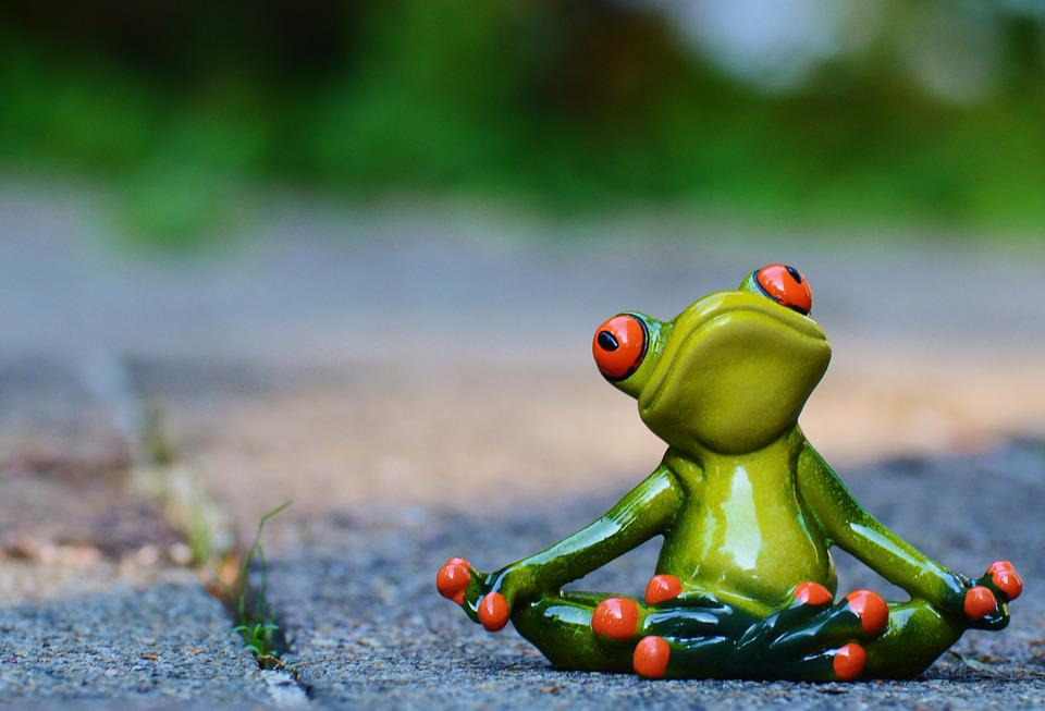 Free Photo Yoga Frog Relaxed Figure Funny