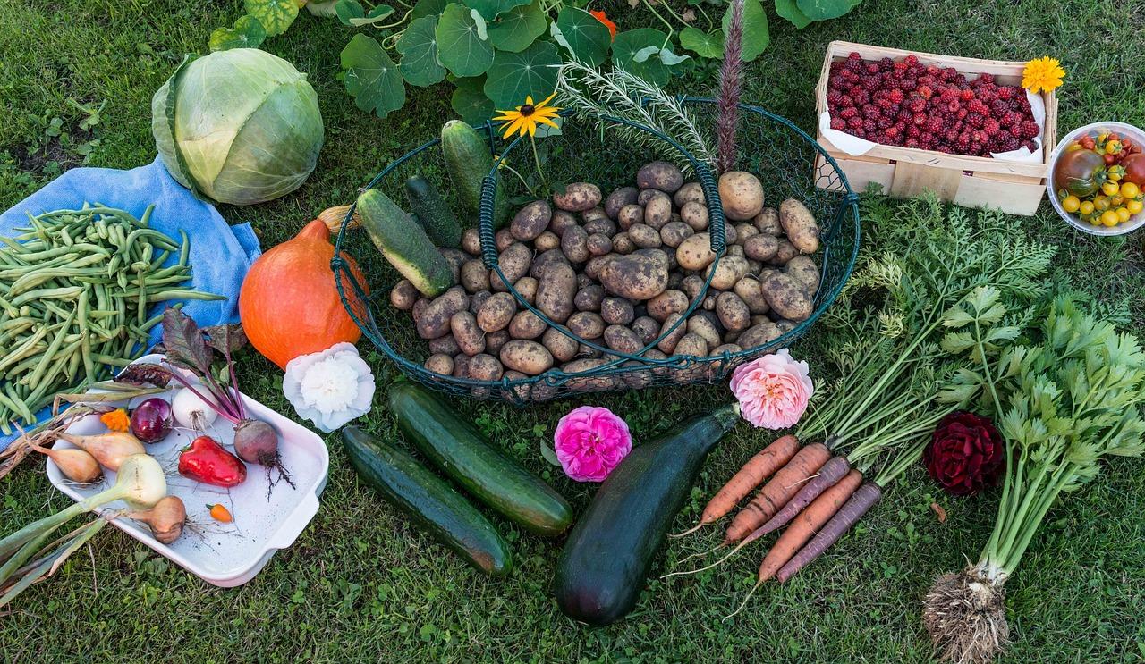 Картинки, картинки сбор урожая на огороде