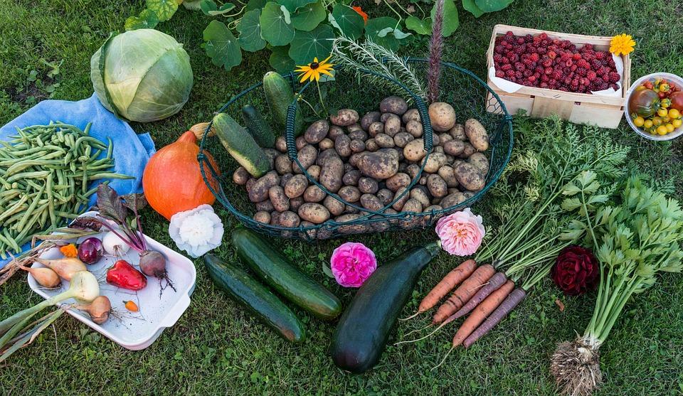 Herbst Ernte Garten Kostenloses Foto Auf Pixabay