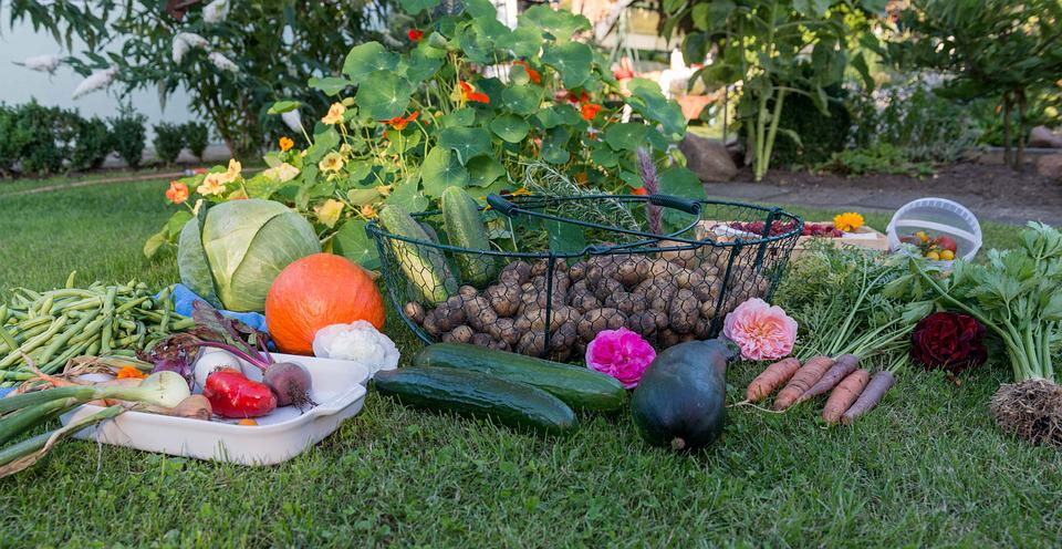 Free photo Autumn Harvest Garden Ve ables Free