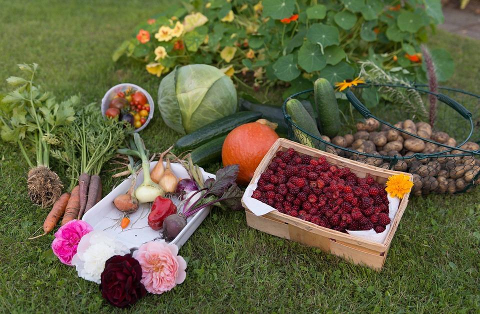 Photo Gratuite L 39 Automne R Colte Jardin L Gumes Image Gratuite Sur Pixabay 915632