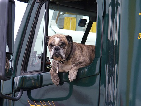Dog Window Truck Semi Pet Animal Transport