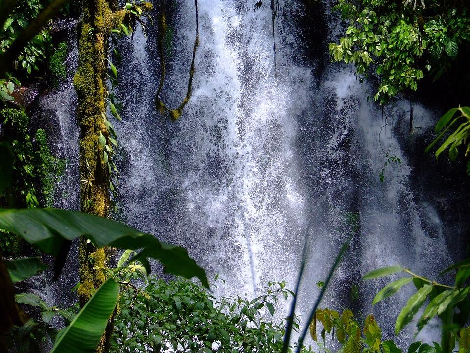 Chutes D'Eau, Cèdre, Philippines, La Nature, La Forêt