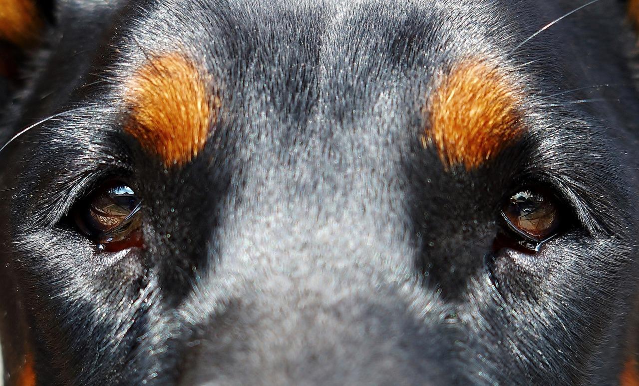 Глаза собаки фото крупным