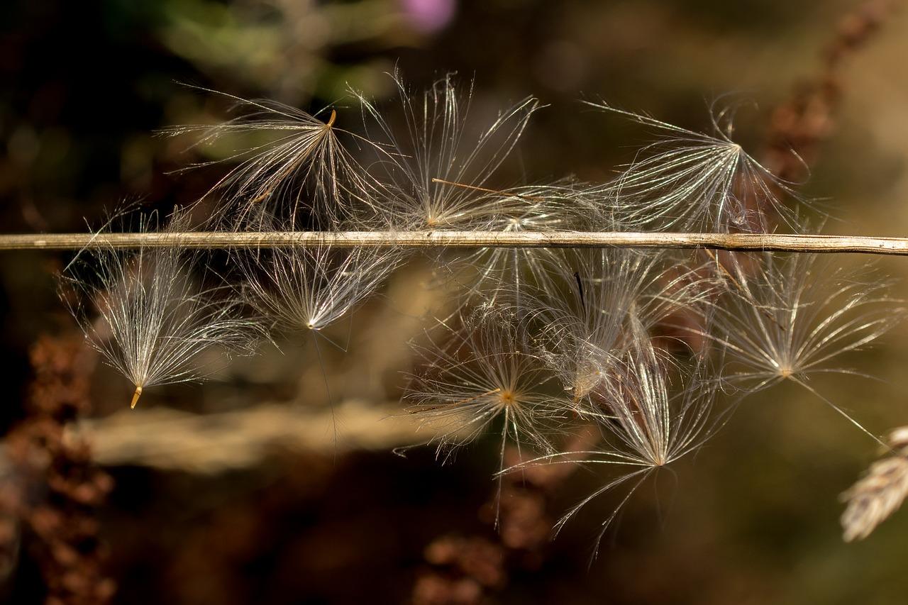 фото летящих семян сеть продуктовых