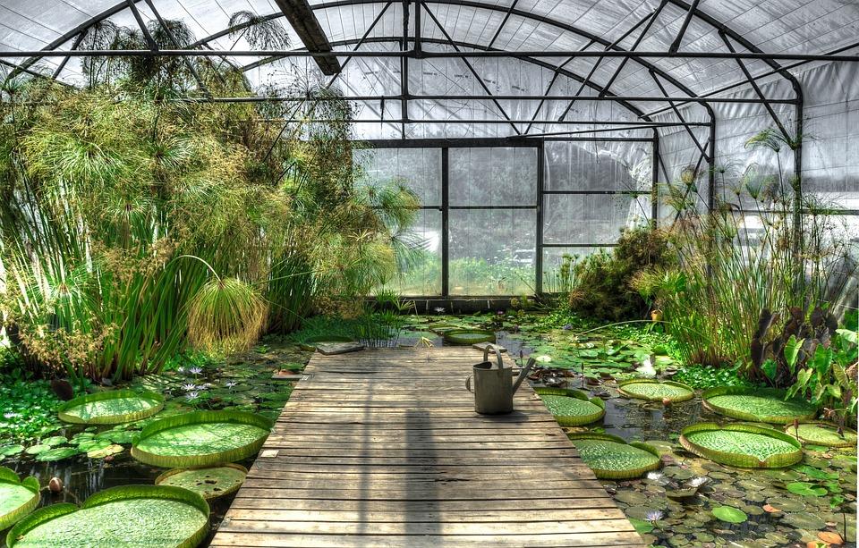 Free Photo Lotus Greenhouse Waterlily Free Image On