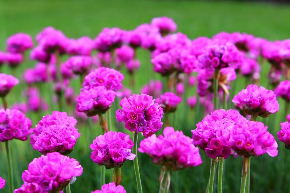 Flowers Pink Purple Free Photo On Pixabay
