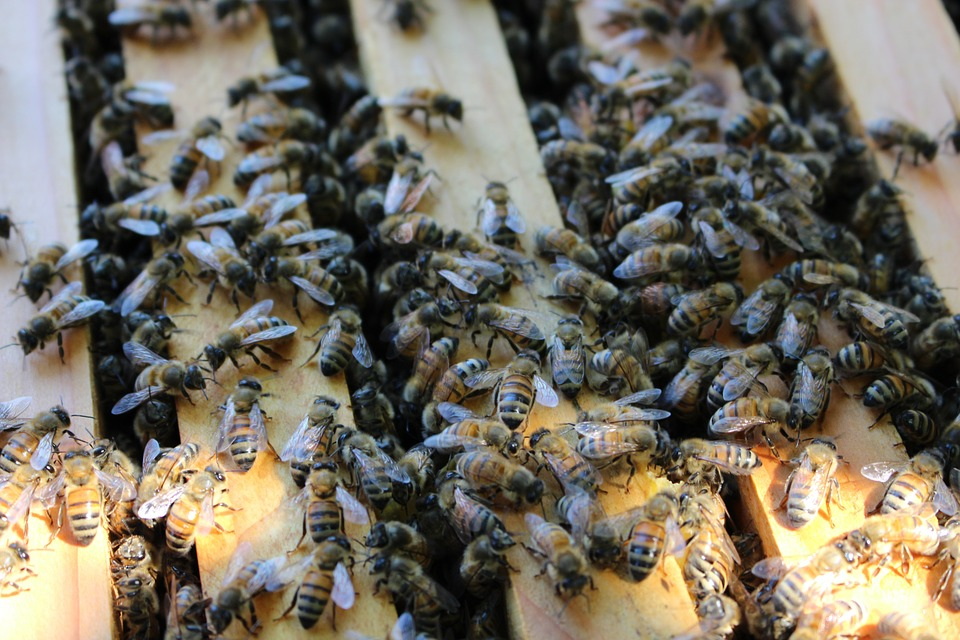 Bee Colmena Apicultura · Foto gratis en Pixabay
