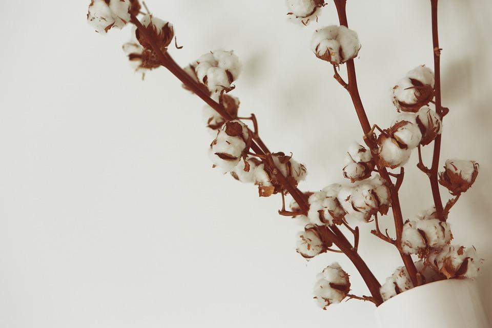 Coton Fleurs Vase Photo Gratuite Sur Pixabay