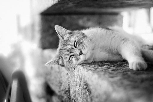 Gato Blanco Y Negro Imágenes Pixabay Descarga Imágenes Gratis