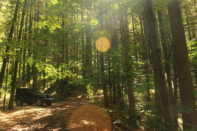 Free photo: Jeep, Forest, Woods, Sun Rays - Free Image on ...