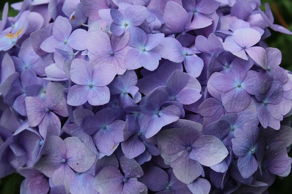 free photo purple, flowers, spring  free image on pixabay, Beautiful flower