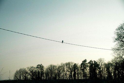 鳥、ケーブル、ワイヤー、日没、空、木