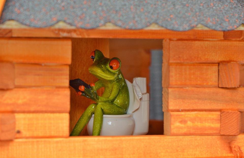 Frog, Mobile Phone, Window, Toilet, Loo, Wc, Funny