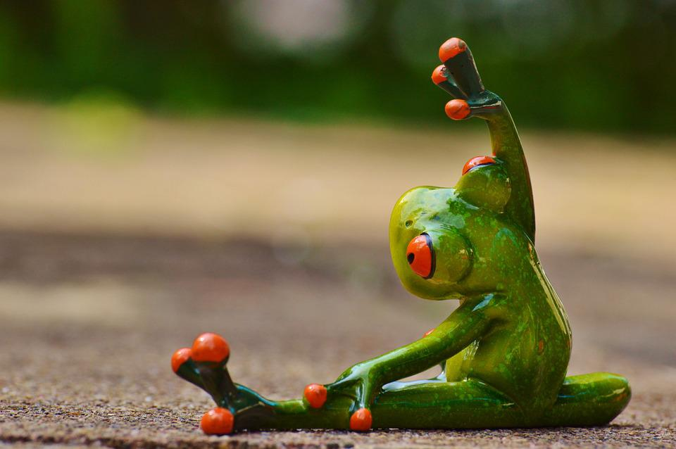Free photo sport gymnastics frog funny free image on pixabay 927762 - Funny frog pictures ...