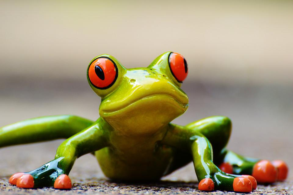 Free photo Frog Funny Figure Cute Animal Free Image on