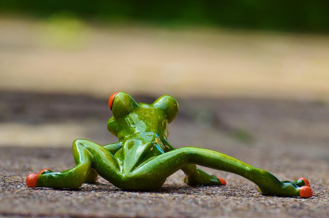Картинка с лягушкой смешная, днем рождения бывший