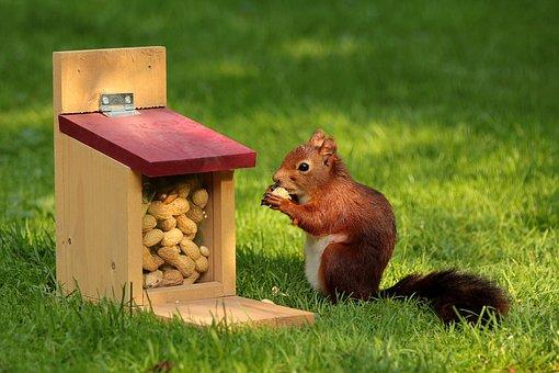 Animal, Squirrel, Sciurus, Bird, Meal