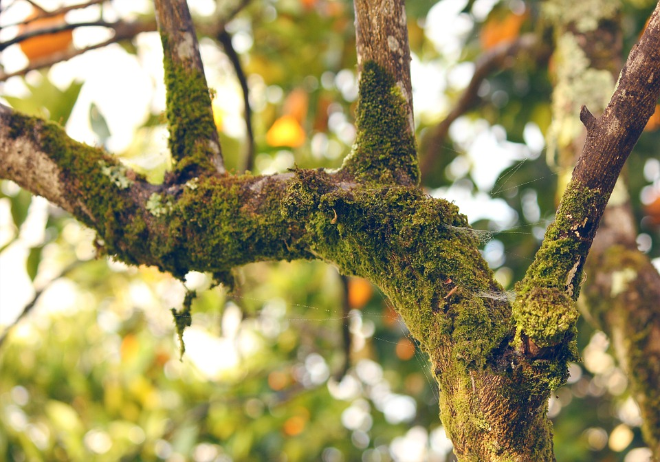moss orange tree branch free photo on pixabay