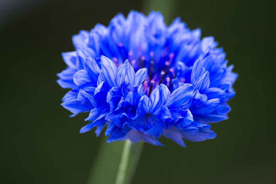 青い花の種類|和名/花言葉/季節別・ハーブの種類
