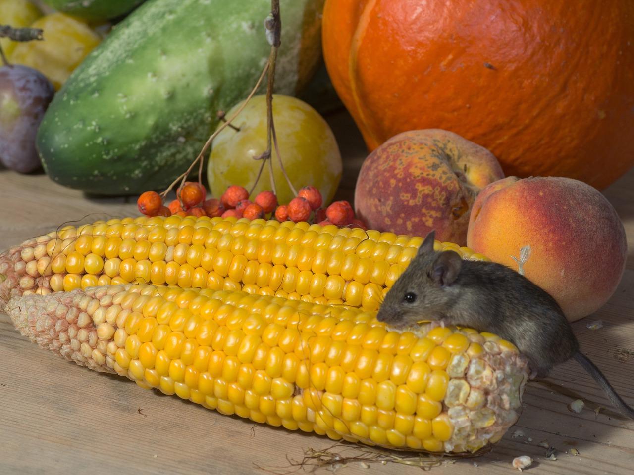 Fuente de alimento para ratones