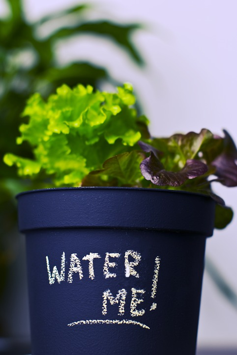 Plant, Pot Plant, Grow, Flower Pot, Message, Note