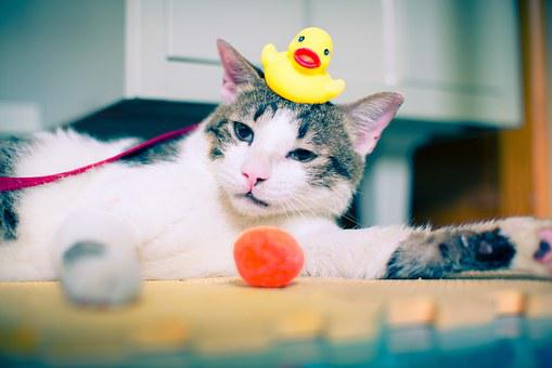 Cat, Rubber Duck, Duck, Rubber, Bath