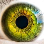 oko, gałki ocznej, zielony