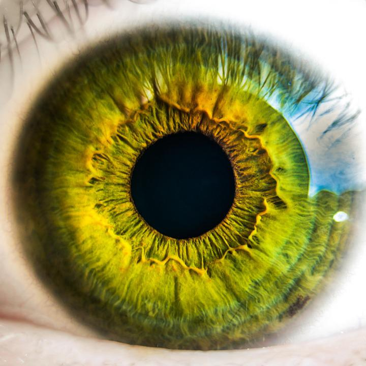 zöld látás